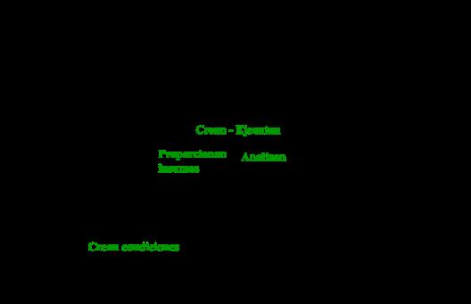 piramidecosistemadesc (1)